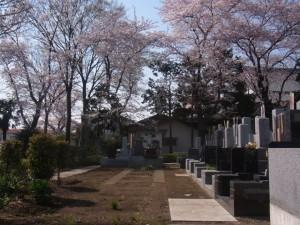 新区画は桜の下でお参りできます